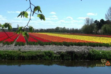 Keukenhof حديقة الزهور – هولندا